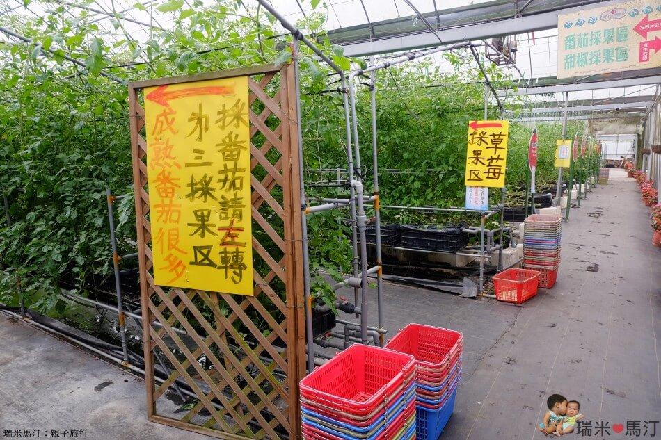 金勇番茄農場