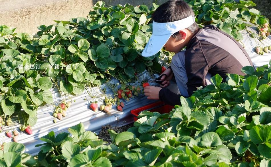 我家草莓園