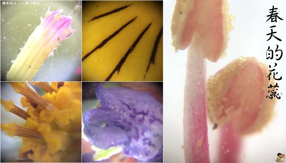 µHandy 行動顯微鏡