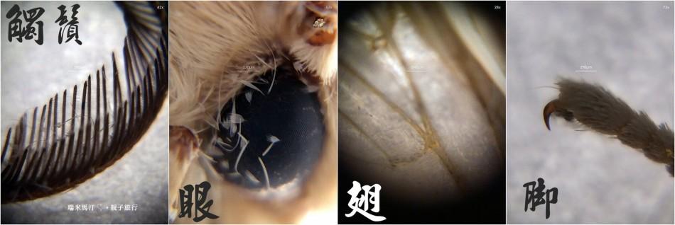 uhandy 行動顯微鏡